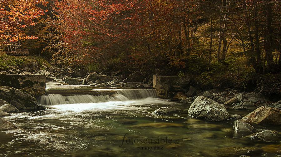 Hasta la luz se conmueve con el otoño. Bosques del pirineo francés.
