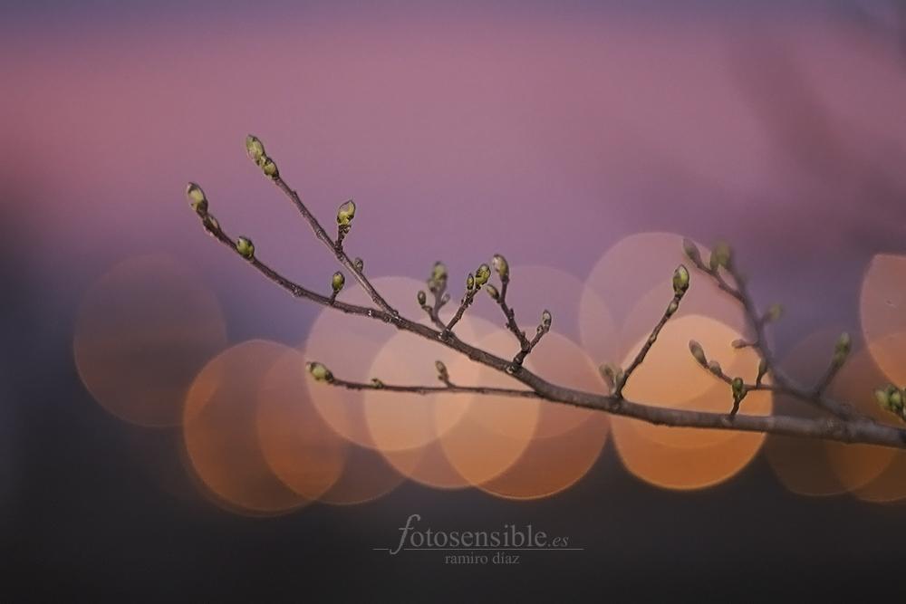 Los primeros brotes de la primavera se asoman por entre los soles que se ponen... como el invierno.
