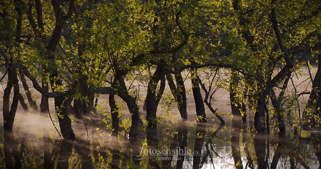 Los primeros rayos de luz se abren camino entre los árboles y la bruma en el embalse.